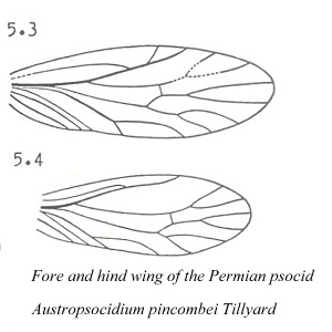 fossil wings.